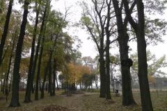 2011-10-30 Czerniewice - park (33)