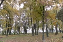 2011-10-30 Czerniewice - park (38)