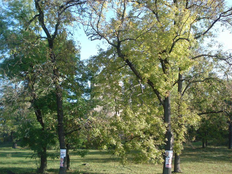 2007-10-21 Drzewica - ruiny zamku (1)
