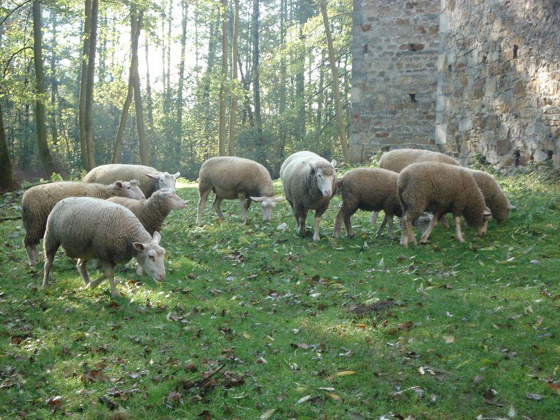 2007-10-21 Drzewica - ruiny zamku (27)