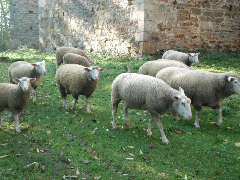 2007-10-21 Drzewica - ruiny zamku (28)