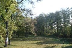 2007-10-21 Drzewica - ruiny zamku (2)