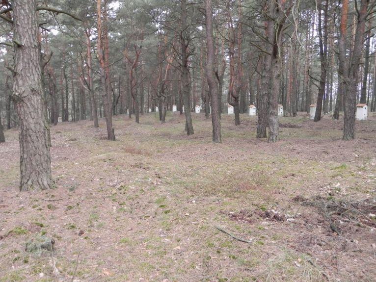 2011-04-17 Inowłódz - cm. z I wojny światowej (24)
