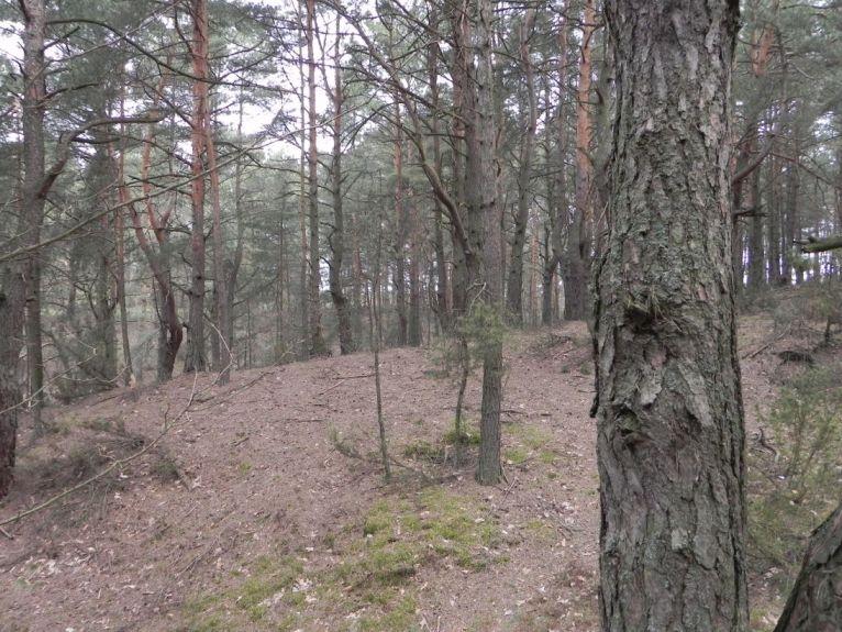 2011-04-17 Inowłódz - cm. z I wojny światowej (31)