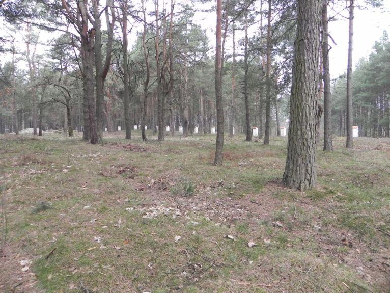 2011-04-17 Inowłódz - cm. z I wojny światowej (8)