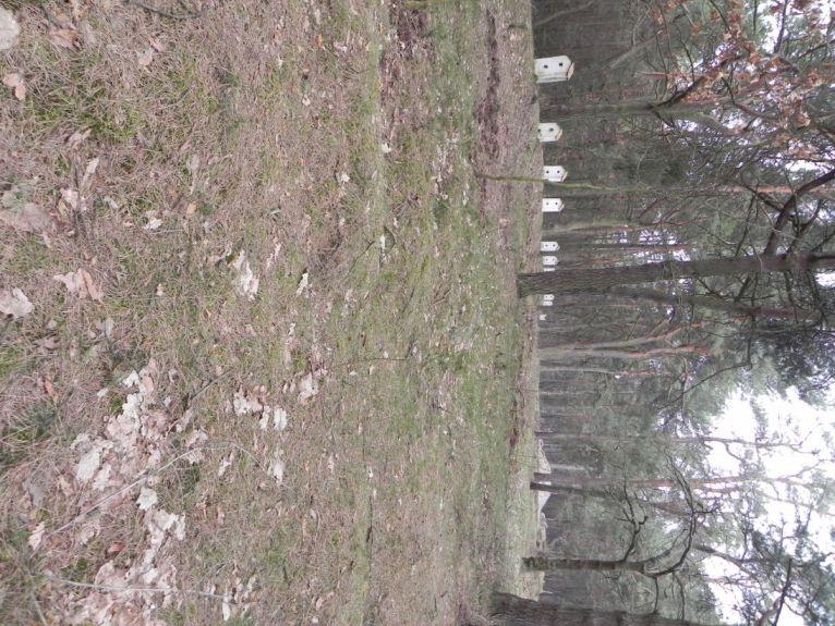 2011-04-17 Inowłódz - cm. z I wojny światowej (9)