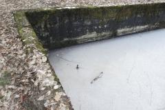 Jeleń - Bunkier Basen Przeciwpożarowy (29)