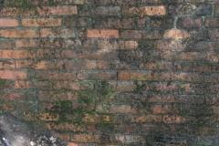Jeleń - Bunkier Główny Podmurówka (3)