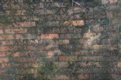 Jeleń - Bunkier Główny Podmurówka (6)