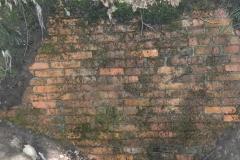 Jeleń - Bunkier Główny Podmurówka (8)