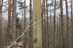 2020-02-02 Małomierz kapliczka nr1 (16)