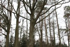2020-03-06 Przyłęk Duży kapliczka nr1 (1)
