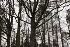 2020-03-06 Przyłęk Duży kapliczka nr1 (13)