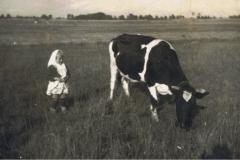 1955r. Wysokienice - Dziewczynka pasąca krowę